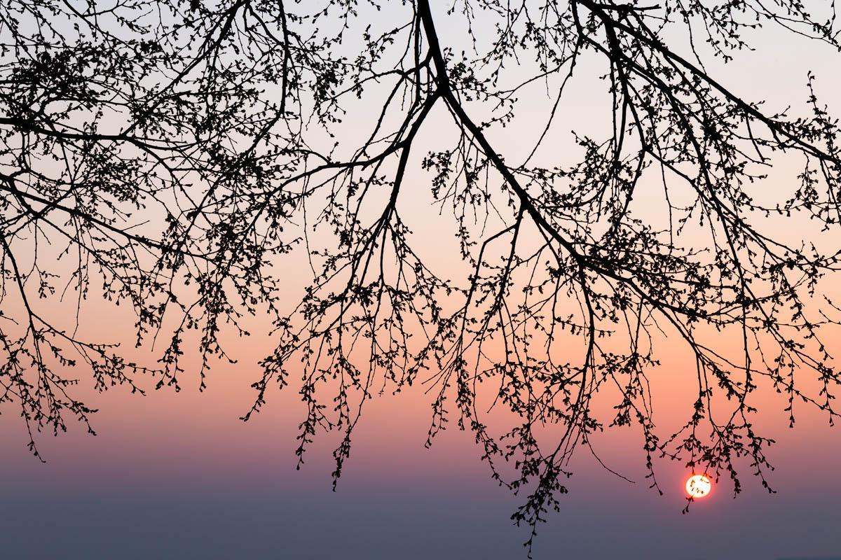 Falling Sun in Trieste