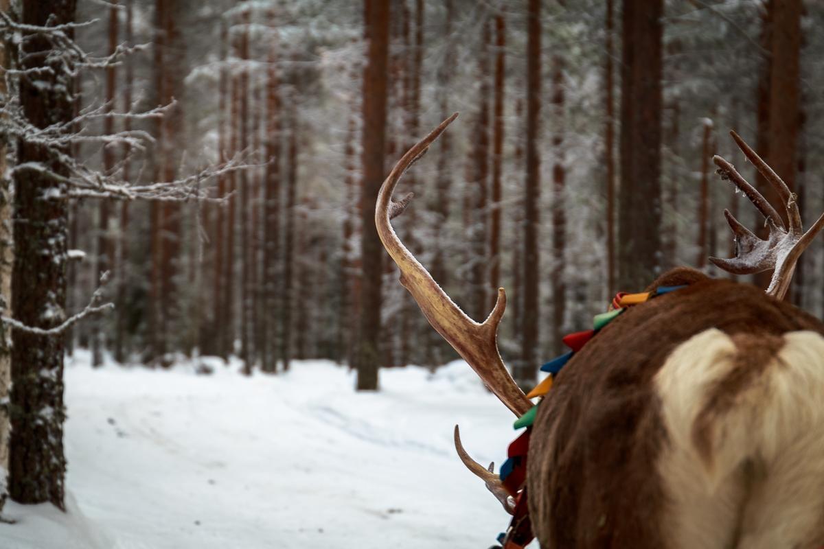 One Reindeer Drive