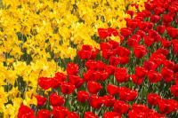 Yellow slash Red
